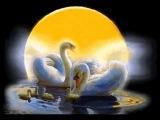 Лебединая верность Е,Мартынов (Swan fidelity E Martynov
