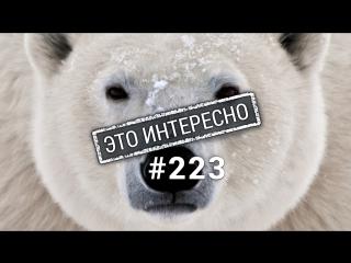 Это интересно: Шокирующие факты о белом медведе