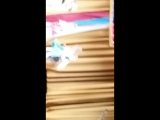 Танец котят)