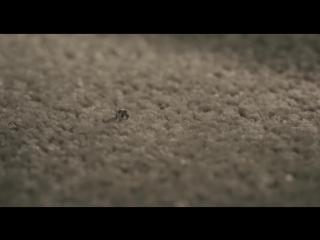 Marvels ant-man - clip 6