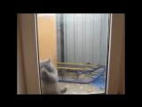 Коты - моют окна без РАЗВОДОВ