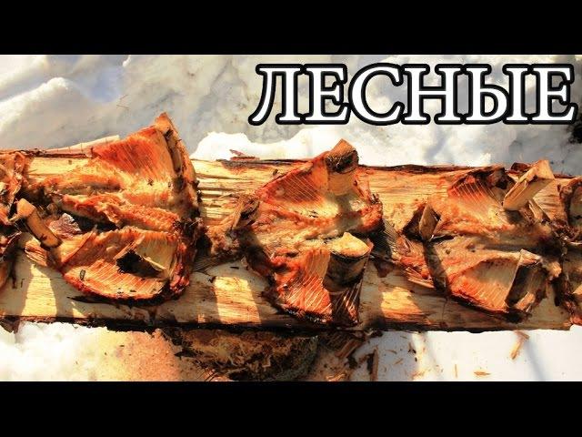 Дикая кухня. Рыба, зажаренная на доске / Лесные / 19.03.2016