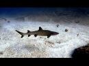 Scuba Diving North Stradbroke Island