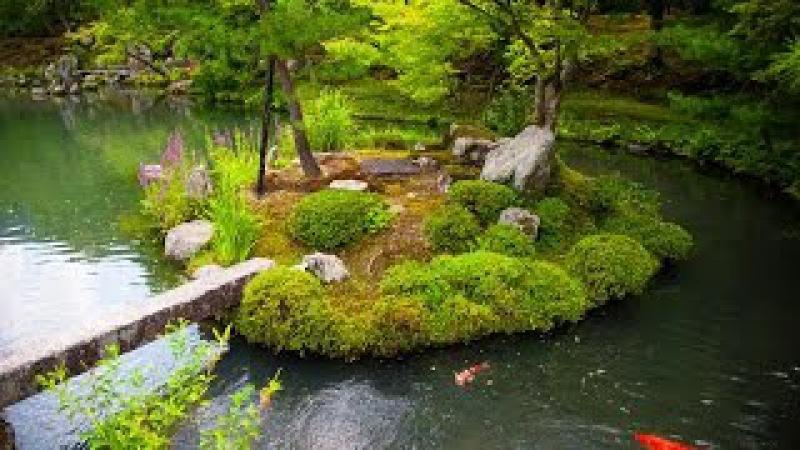 Nijo Castle Gardens Japan - Сады замка Нидзё, Япония 二条城の庭園