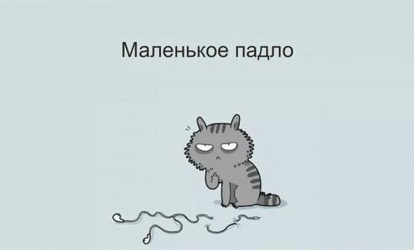 http://cs627827.vk.me/v627827165/3adbd/fmMG8Et5t4o.jpg