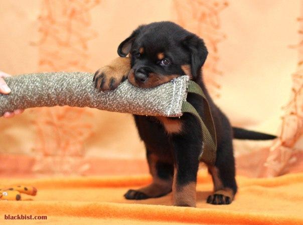 Многоборье с собакой  5ucrmqzL3BA