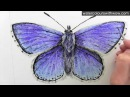 How to paint a realistic and detailed blue butterfly in watercolor by Anna Mason