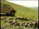 Армянский джип hАйк (Hayk Хайк)