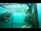 ПРО АКУЛ: Самая Большая Акула ! ШОК !!!