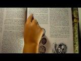 ❝ЛЖЕ-чудеса науки в Коране...❞- Дополнение к ... ®