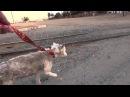 Спасение бездомной собаки живущей в куче мусора.
