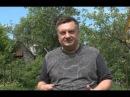 Жимолость и как сделать хороший зелёный забор Ваши 6 соток Выпуск 2