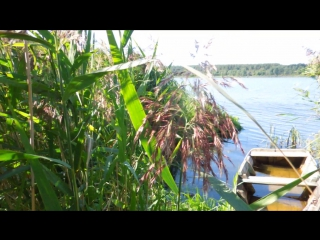 озеро Мосылино. Новгородская область