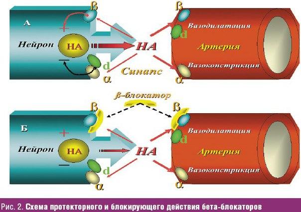 list-naznacheniy-pri-gipertonicheskoy-bolezni