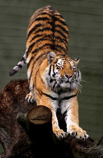 Дружба между хищником и жертвой существует.