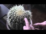 Gourski - Cactus Trap