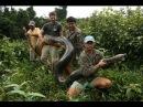 Гиганты мира животных — Самая большая змея