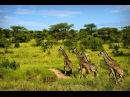 Африка крупным планом — Призраки Серенгети