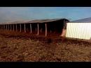 В оборе бычков в приюте ОО Бхуми