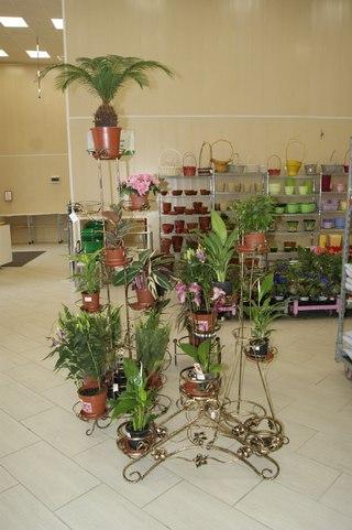 Казань клумба цветы цены