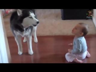 Вот что бывает, если оставить собаку наедине с ребенком. Ты растаешь при виде эт