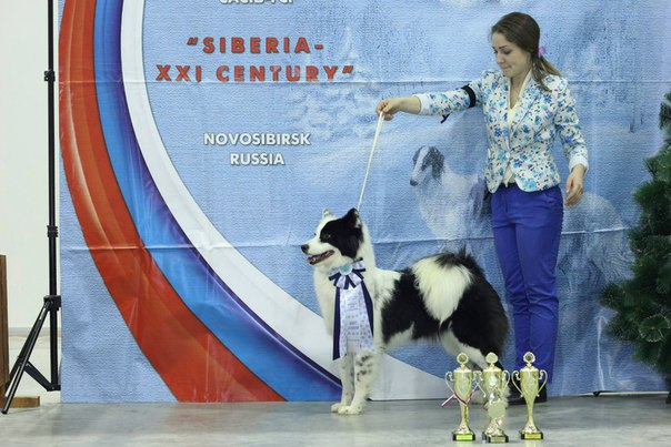 Best FCI Non-recognized Breed - Winners of the international dog show «Siberia - XXI century» (Novosibirsk), 12 December 2015
