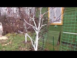 Моя дача в ноябре.Как подготовить сад и огород к зиме.