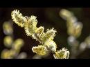Timelapse SPRING AWAKENING blooming flowers, growing plants. David Attenborough's opinion