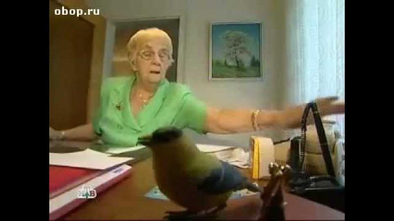 Пенсионерка трейдер, история успеха