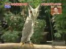 Африканская сова трансформер The African owl transformer