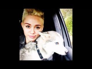 Das Geheimnis um Miley Cyrus' tote Haustiere