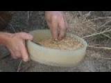 Сидераты. Как получить свои семена. Горчица белая