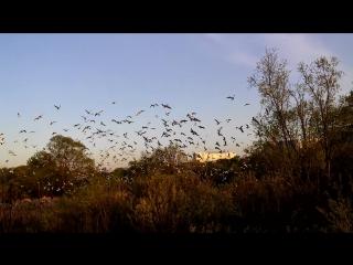 Чайки в Братеево