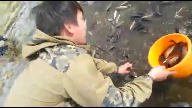 Карасей ловят руками в Усть-Алданском улусе