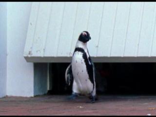 Твои веселые друзья зверята.1 серия. Императорский пингвин Питер.2005.