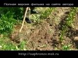 03 Огород в родовом поместье (свекла чеснок)