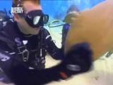 Нападение акулы няньки
