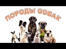Собаки Породы собак Развивающее видео для детей