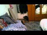 Кот террорист держал в заложниках трех человек)