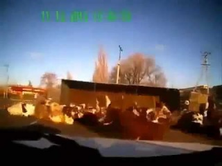 Камаз груженный коровами перевернулся ДТП KamAZ loaded with cows overturned accident