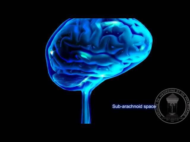 Анатомическое строение мозга Спинно мозговая жидкость (ликвор). 3D визуализация.