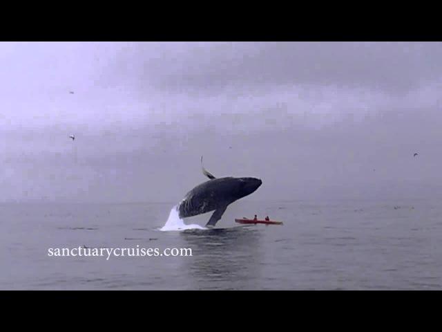Огромный кит выпрыгнул прямо на лодку
