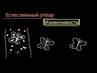 Введение в эволюцию и естественный отбор
