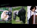 Поправка по высшим приматам