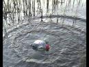 Ловля сомов на банки Fishing of catfishes on jar