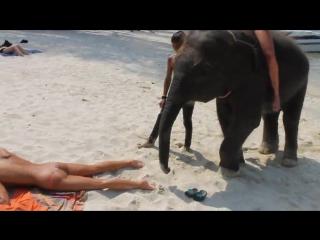 Слоник в турции насилует русскую туристку.