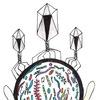 Виртуальный кружок микробиологии