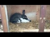 Как кончают кролики
