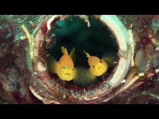 Mucky Secrets - Prologue - The Marine Creatures of the Lembeh Strait