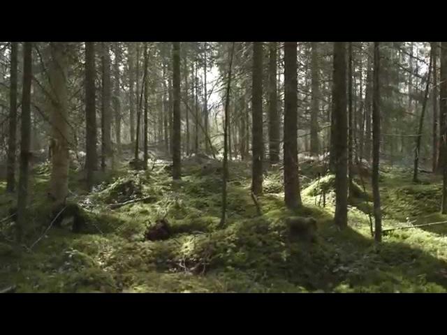 J.S. Bach - Goldberg variations, BWV 988: Aria